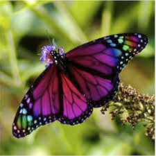 colorful butterfly2
