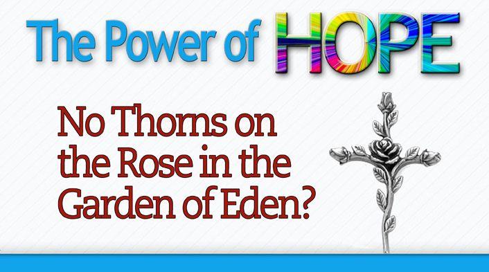 No-thorns-on-rose-in-Garden-Eden
