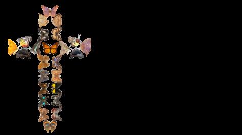 butterflyCross_NO_BKGRD