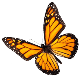 sm monarch