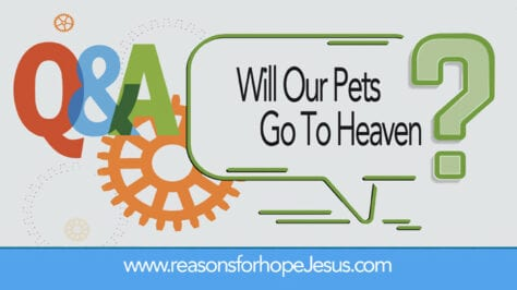Will Our Pets Go To Heaven